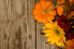 Pumpkins and Sunflower Royalty Free Stock Photo