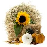 Pumpkins and sunflowers Stock Photos