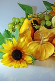 Pumpkins with sunflowers. Autumn composition with different kinds of pumpkins, grapes and sunflowers Royalty Free Stock Image