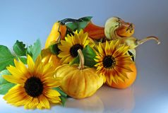 Pumpkins with sunflowers. Autumn composition with different kinds of pumpkins and sunflowers Stock Image
