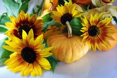 Pumpkins with sunflowers. Autumn composition with different kinds of pumpkins and sunflowers Stock Photo