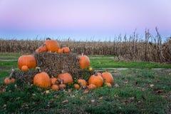 Pumpkins at Sunset stock images