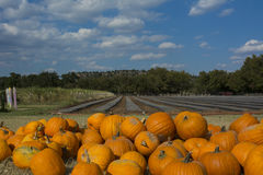 Pumpkins at SweetBerry Farms. Marble Falls, Texas near Austin Royalty Free Stock Photography