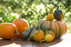 Pumpkins on a table Royalty Free Stock Photos