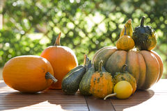 Pumpkins on a table Royalty Free Stock Photo