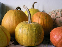Pumpkins on the table Royalty Free Stock Images