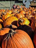 Pumpkins of a table at a farm Stock Photo