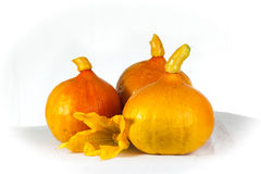 Pumpkins on a table. Three pumpkins on a white table Stock Photography
