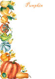 Pumpkins. Template with decorative pumpkins watercolor painting Royalty Free Stock Photo