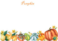 Pumpkins. Template with decorative pumpkins watercolor painting Royalty Free Stock Image