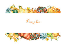 Pumpkins. Template with decorative pumpkins watercolor painting on white background. Royalty Free Stock Photo
