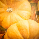 Pumpkins with a Textured Effect Stock Image