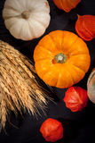 Pumpkins for Thanksgiving Stock Images