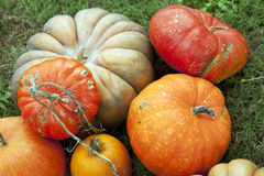 Pumpkins for Thanksgiving Halloween Stock Photos