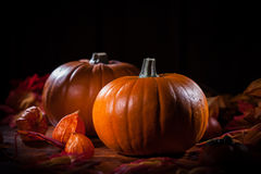 Pumpkins for Thanksgiving and  Halloween Stock Photo