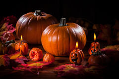 Pumpkins for Thanksgiving and Halloween stock images