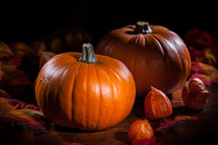 Pumpkins for Thanksgiving and Halloween stock photos