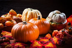 Pumpkins for Thanksgiving and  Halloween Royalty Free Stock Photo