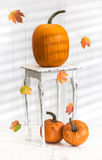 Pumpkins For Thanksgiving Royalty Free Stock Photos