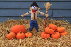 Pumpkins, Thanksgiving and Scarecrow Stock Photography