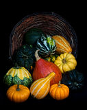 Pumpkins - Thanksgiving scene. Colorful pumpkins collection on the black background - Thanksgiving scene Royalty Free Stock Images