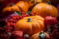 Pumpkins and Thanksgiving Stock Photos