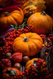 Pumpkins and Thanksgiving Royalty Free Stock Images