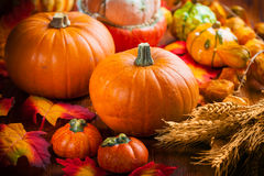 Pumpkins for Thanksgiving stock photography