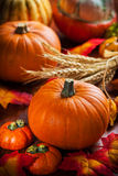 Pumpkins for Thanksgiving Royalty Free Stock Images