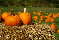 Pumpkins on top of hay bale in pumpkin patch Royalty Free Stock Photo