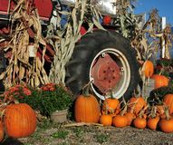 Pumpkins and Tractor. Bright display of orange pumpkins next to a vintage red tractor at a local farm royalty free stock photos