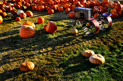 Pumpkins and Tractor Stock Images