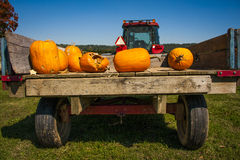 Pumpkins on a tractor bed Stock Image