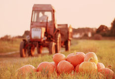 Pumpkins and tractor in field Royalty Free Stock Images