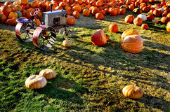 Pumpkins and Tractor Royalty Free Stock Photo
