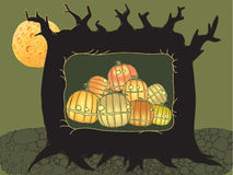 Pumpkins in the tree hollow Stock Photos