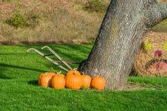 Pumpkins Beside Tree and Old Hand Tiller stock photos