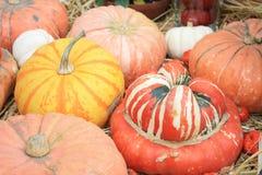 Pumpkins, turban squash at harvest festival royalty free stock photography