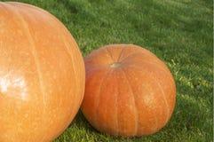 Pumpkins. Two pumpkins on the grass Stock Photo