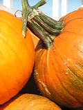 Pumpkins up close Royalty Free Stock Image