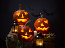 Pumpkins and vampire - bat Royalty Free Stock Photos