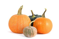 Pumpkins varieties Stock Image