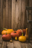 Pumpkins variety Royalty Free Stock Photo