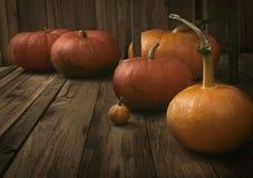Pumpkins variety Stock Photos