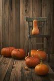 Pumpkins variety Stock Image