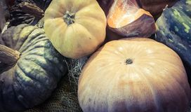 Pumpkins of various kinds Royalty Free Stock Images