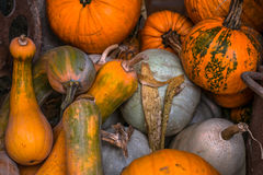 Pumpkins in various shapes Stock Images