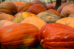 Pumpkins Gourd Autumn Harvest Royalty Free Stock Photos