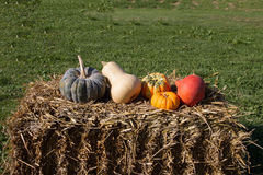 Pumpkins. Various pumpkins on a straw bale Stock Images