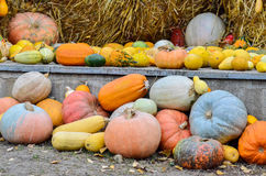 Pumpkins and various vegetables, on bales of straw Stock Images